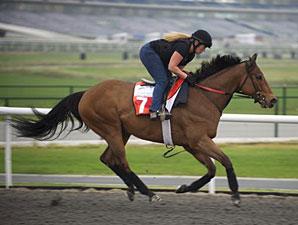 Stradivinsky, Dubai 2011