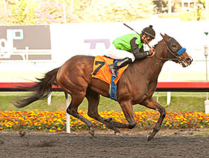 Streaming wins the 2013 Hollywood Startlet.