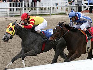 Street Storm wins the 2011 Mardi Gras.