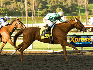 Striking Dancer wins the 2010 La Canada.