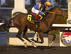 Strut the Course wins the 2014 Maple Leaf Stakes