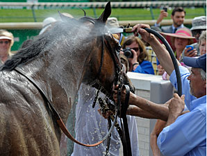Successful Dan after winning the 2012 Alysheba.