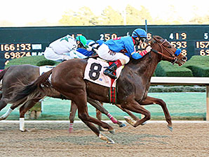 Sugar Shock wins the 2015 American Beauty.