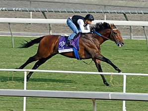 Suggestive Boy - Breeders' Cup 2012.