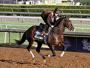 Summer Front - Breeders' Cup 2014