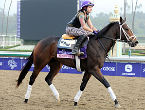 Summer of Fun - Breeders'  Cup 2012