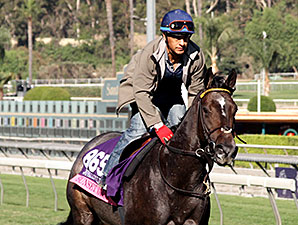 Sunset Glow - Breeders' Cup 2014.