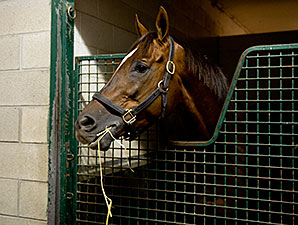Suntracer - Woodbine, October 17, 2014