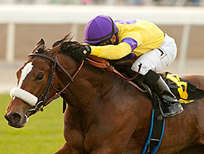 Sushi Empire wins the 2014 Blue Norther Stakes.