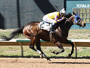 Sweet Dixie Van wins the 2013 Ingrid Knotts Stakes.