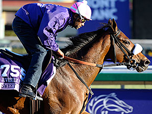 Sweet Reason - Breeders' Cup 10/31/2013