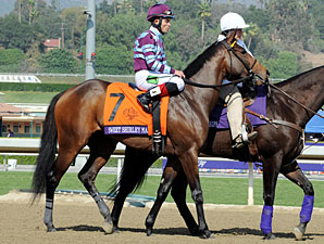 Sweet Shirley Mae before the 2012 Breeders' Cup Sprint.