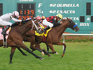 Swift Warrior wins the 2013 Tampa Bay Stakes.