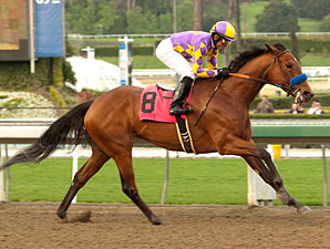 Switch in the 2011 Santa Monica Handicap.