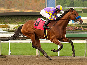 Switch winning the 2011 Santa Monica Handicap.