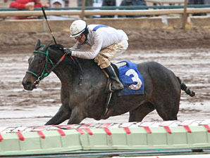Table Mesa wins the 2011 Sun City Handicap.