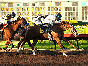 Take Charge Brandi wins the 2014 Starlet Stakes.