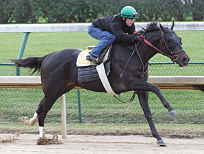 Take Charge Indy works at Churchill Downs, October 21, 2011.