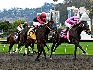 Tamarando wins the 2014 El Camino Real Derby.