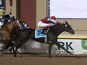 Ted's Folly wins the 2011 Remington Springboard Mile.