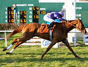 Tensas Cat wins the 2010 Gentilly.
