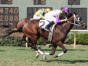 Tequila Factor wins the 2011 Sunny's Halo Stakes.