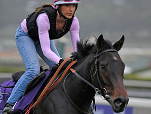 The Gold Cheongsam - Breeders' Cup 2012
