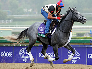 The Lumber Guy - Breeders' Cup 2012.