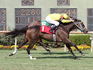 Thegirlinthatsong wins the 2013 Happy Ticket Stakes.