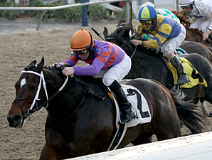 Thiskyhasnolimit wins the 2012 Louisiana Handicap.