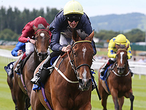 Thistle Bird wins the 2014 Pretty Polly Stakes