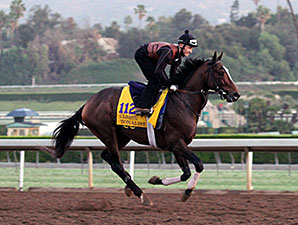Tonalist - Breeders' Cup, October 30, 2014