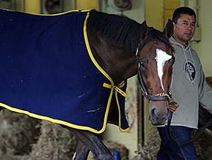 Tonalist - Belmont Park, May 24, 2014