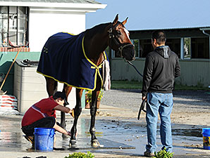 Tonalist - Belmont Park, May 30, 2014