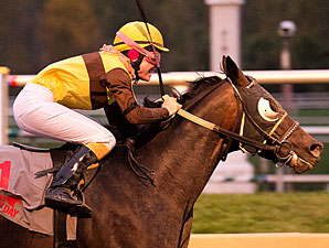 Tooth N Claw wins the 2013 Maryland Million Starter Handicap.