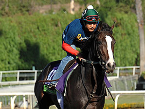 Tourist - Breeders' Cup 2014
