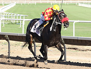 Tribal Gal wins the 2013 Princess of Pal Stakes.