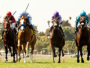 Tribal Spy wins the 2014 Irish O'Brien Stakes.
