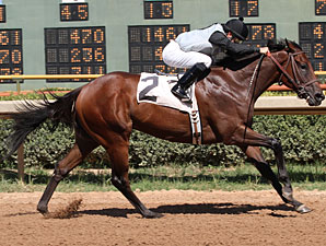 Tricky Suspect wins the 2011 Razorback Futurity.