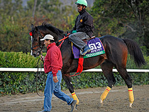 Trinniberg - 2013 Breeders' Cup, October 29, 2013.