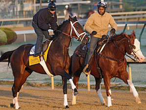 Uncle Mo jogging on the track for the 2011 Breeders' Cup Classic.