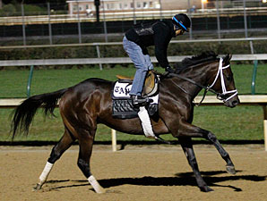 Uncle Mo - Churchill Downs Oct 28, 2011.
