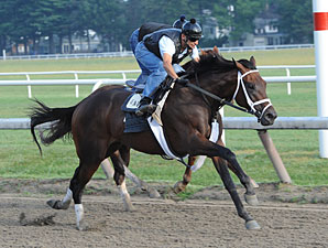 Uncle Mo works at Saratoga on August 9, 2011.