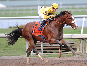 Union Rags wins the Fountain of Youth Stakes.