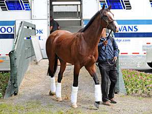 Union Rags arrives at Belmont Park on June 6, 2012.