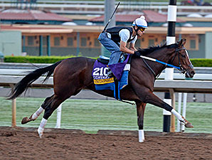 Untapable works towards the Breeders' Cup Oct. 26, 2014.