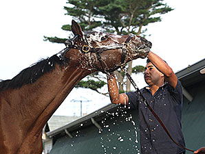 Untapable - Monmouth Park, July 26, 2014.