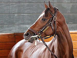 Untapable - Parx, September 19, 2014.