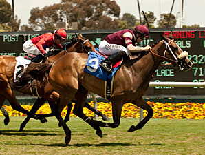 Unusual Hottie wins the 2013 Fran's Valentine Stakes.