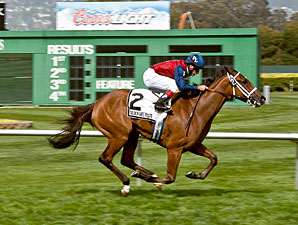 Unusual Way wins the 2013 Campanile Stakes.